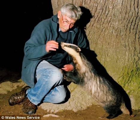 Badger Whisperer.jpg